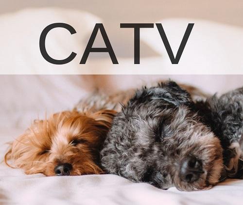 CATVとはケーブルテレビのこと